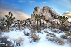 Snowy Landscape in Joshua Tree National Park Royalty Free Stock Image