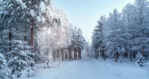 Snowy landscape royalty free stock photography
