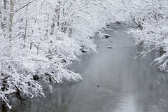Snowy Landscape, Little Pigeon River. Trees, Snowy Landscape, Little Pigeon River, East Tennessee stock images