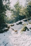 Snowy landscape in the midst of nature Royalty Free Stock Photos