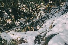 Snowy landscape in the midst of nature Royalty Free Stock Image