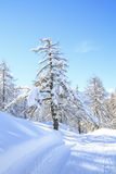 Snowy landscape in the mountains. Of Slovenia Stock Photos
