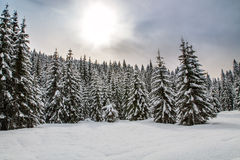 Snowy landscape in the mountains. Of Slovenia Royalty Free Stock Photo
