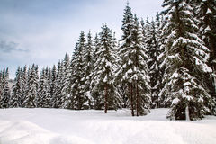 Snowy landscape in the mountains Royalty Free Stock Photos