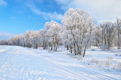 Snowy landscape by the Narew river valley. Stock Image