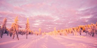 Snowy landscape, pink sunset light, frozen trees in winter in Saariselka, Lapland Finland. Snowy landscape, pink sunset light, frozen trees in winter in stock images