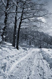 Snowy landscape Royalty Free Stock Image
