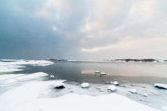 Snowy Landscape with Rocks and Swans, Snowing. A scenic Scandinavian (Swedish) landscape as two swans are swimming in the cold ocean right outside a rocky beach Stock Photos