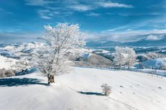 Snowy landscape in Romania, Eastern Europe, near Christmas time royalty free stock image