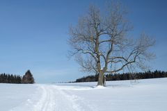 Snowy Landscape with a Solitary Tree Royalty Free Stock Photo