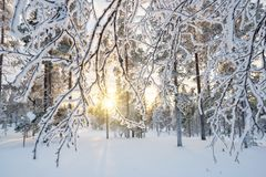 Snowy landscape at sunset, frozen trees in winter in Saariselka, Lapland Finland Royalty Free Stock Image