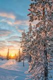 Snowy landscape at sunset, frozen trees in winter in Saariselka, Lapland Finland. Snowy landscape at sunset, frozen trees in winter in Saariselka, Lapland royalty free stock photography