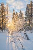 Snowy landscape at sunset, frozen trees in winter in Saariselka, Lapland Finland Royalty Free Stock Photos