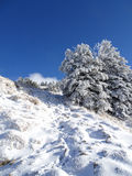 Snowy landscape and trees with a blue sky. Germany, Füssen, Tegelberg - Snowy landscape and trees with a blue sky royalty free stock photography