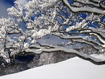 Snowy landscape with trees, mountains and snow Royalty Free Stock Photography