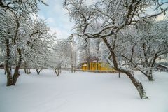 Snowy landscape of trees royalty free stock photography