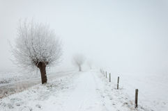 Snowy landscape in winter Royalty Free Stock Photo