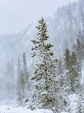 Snowy landscape in Yellowstone stock photos