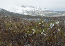 Snowy-Landschaft in Alaska Lizenzfreie Stockfotos