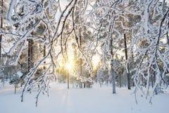 Snowy-Landschaft bei Sonnenuntergang, gefrorene Bäume im Winter in Saariselka, Lappland Finnland Lizenzfreies Stockbild