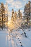 Snowy-Landschaft bei Sonnenuntergang, gefrorene Bäume im Winter in Saariselka, Lappland Finnland Lizenzfreie Stockfotos