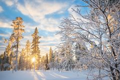 Snowy-Landschaft bei Sonnenuntergang, gefrorene Bäume im Winter in Saariselka, Lappland Finnland Stockfotos