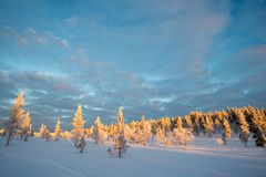 Snowy-Landschaft, gefrorene Bäume im Winter in Saariselka, Lappland Finnland Stockfoto