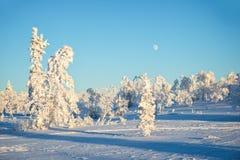 Snowy-Landschaft, gefrorene Bäume im Winter in Saariselka, Lappland Finnland Lizenzfreie Stockfotos
