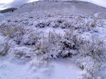 Snowy-Landschaft im tLake Tahoe, Kalifornien stockbilder