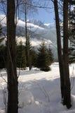 Snowy-Landschaft mit Alpenbergen und -bäumen im Winter Stockfoto