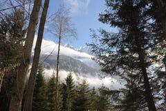 Snowy-Landschaft mit Alpenbergen und -bäumen im Winter Stockfotografie
