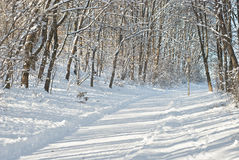 Snowy Lane Royalty Free Stock Images
