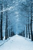 Snowy Lane Royalty Free Stock Photo