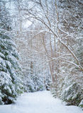 Snowy lane in winter forest Stock Photos