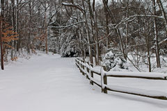 Snowy Lane in Woods Stock Images