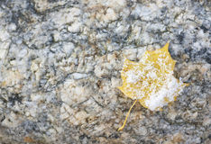 Snowy leaf on rock Stock Photo