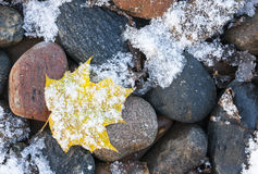 Snowy leaf on rock Stock Images