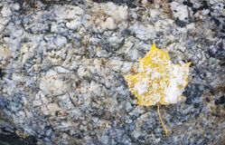 Snowy leaf on rock Royalty Free Stock Photography