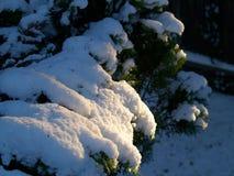 Snowy Leaves7 Lizenzfreies Stockfoto