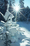 Snowy little fir with bright sunshine, christmas tree Stock Photo
