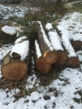 Snowy log pile in forest royalty free stock image