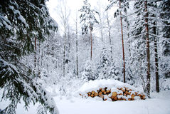 Snowy logpile Royalty Free Stock Photos