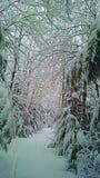 Snowy-Märchenland Stockbilder