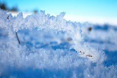 Snowy meadow. Royalty Free Stock Photography