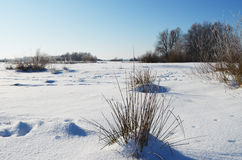 Snowy meadow Royalty Free Stock Photos
