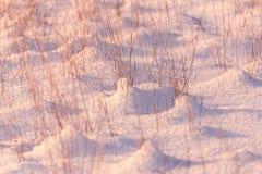 Snowy meadow Royalty Free Stock Photo