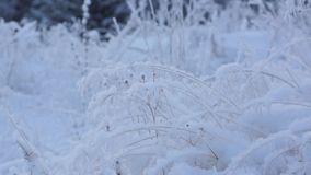 Snowy meadow nature stock footage