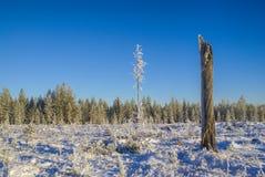 Snowy meadow Stock Photo
