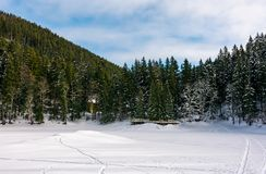 Snowy meadow in spruce forest. Beautiful winter scenery Royalty Free Stock Images