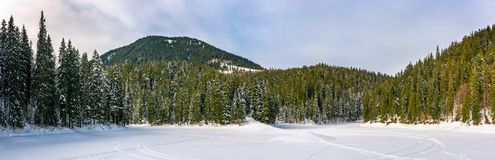 Snowy meadow in winter spruce forest. Snowy meadow in spruce forest. location lake Synevyr Ukraine, frozen in winter. beautiful nature panoramic landscape in Stock Photo